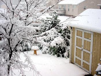 Winter in Virginia